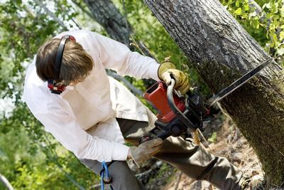 Fayetteville NC Tree Removal Services