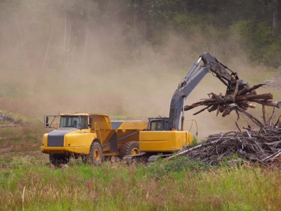 tree removal service eastover nc