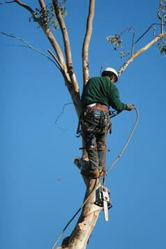 Fayetteville Tree Removal Services