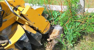 Fayetteville Stump Grinding Services